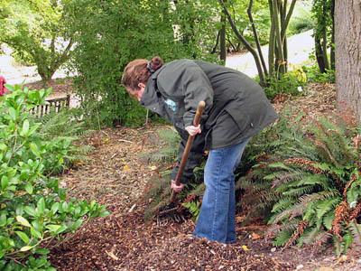 Мульчирование садовых цветов