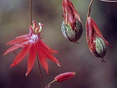 Размножение садовых цветов