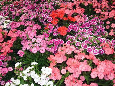Выбор места для садового цветка