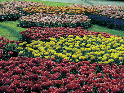 Цветочные композиции из садовых цветов