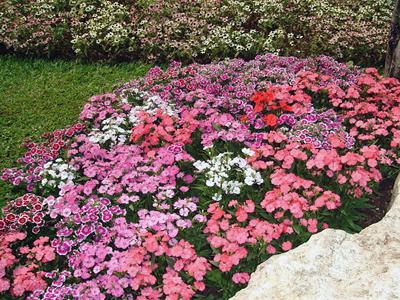 Подбор цветов для клумбы