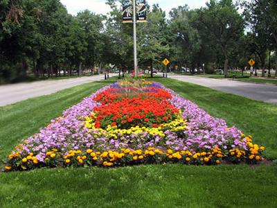 Создание цветочного газона