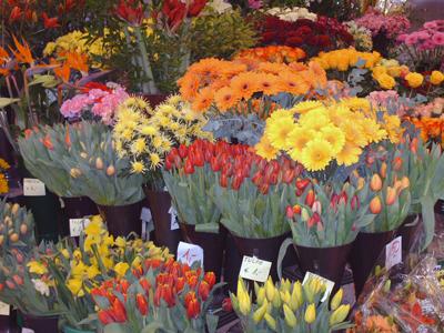 Выбор и покупка цветка в магазине