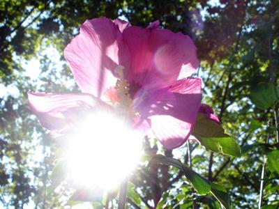 змерение освещенности цветов