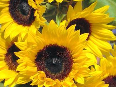 Прищипка и обрезка цветов