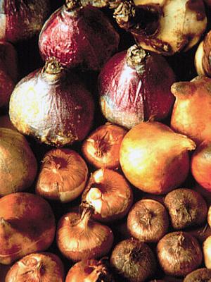 Хранение луковицы