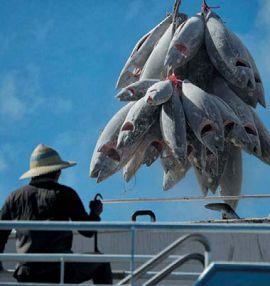 человек рыбачит