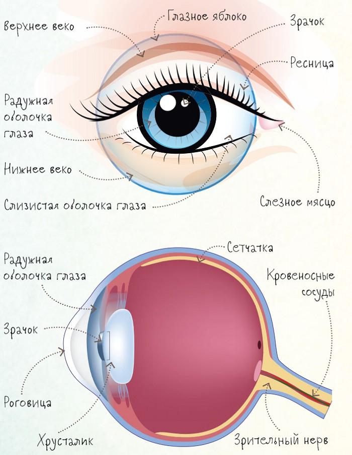 глаз строение глаза человека картинки для этой подборки удивят