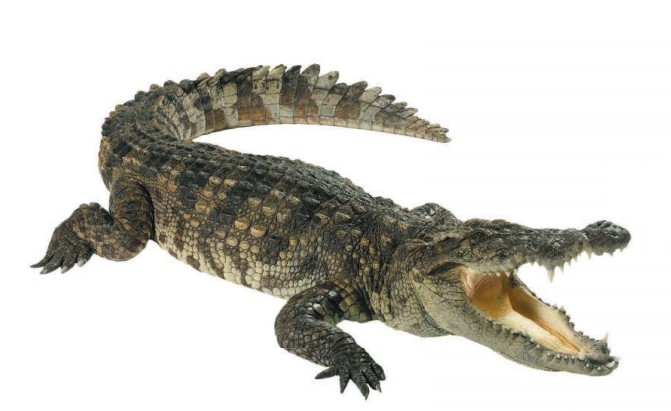 Крокодилы — архозавры