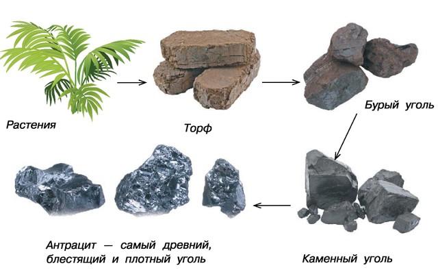Стадии образования угля