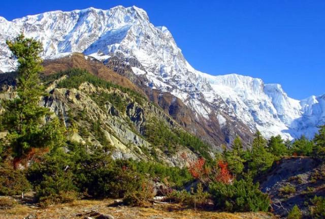 Лес на склонах Гималаев