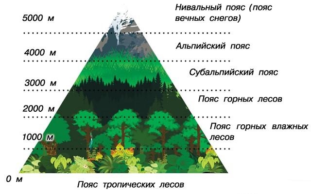 Природные зоны Анд