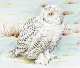 Белая сова обитает в тундре, белое оперение делает ее незаметной