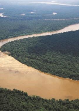 Леса Амазонии называют «легкие планеты»