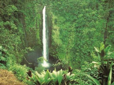 Водопад в сельве