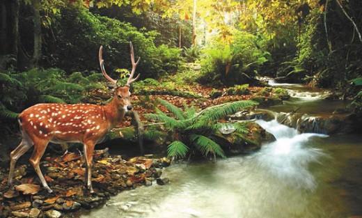 Органические соединения встречаются в природе повсеместно