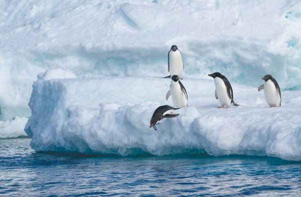 Морская вода замерзает не так быстро, как пресная