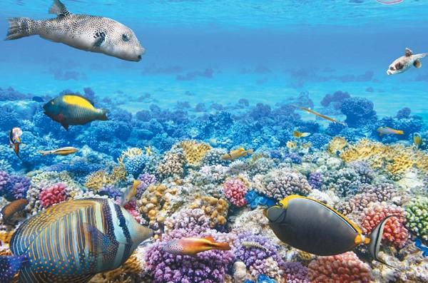 Прозрачная вода морей и океанов