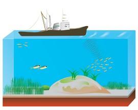 Использование эхолокации для обнаружения косяков рыбы