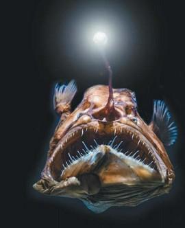 Хищная глубоководная рыба