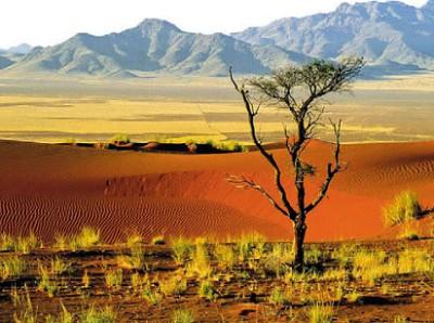 В пустыне Намиб