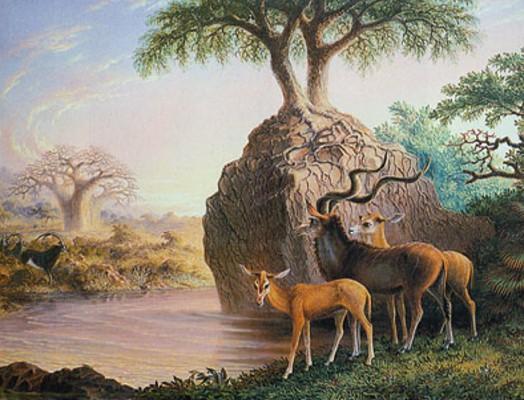 В долине Замбези. Рисунок Т. Бейнса. 1865 г.