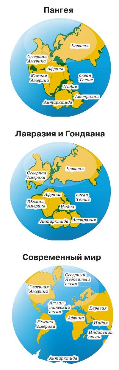 Образование материков и континентов